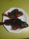 魚…(゜Д゜)
